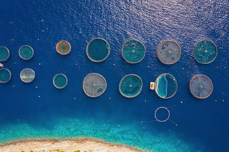 Aquaculture Chile